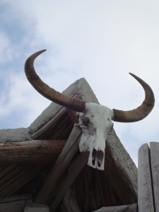 There were several of these skulls hung around the resort.
