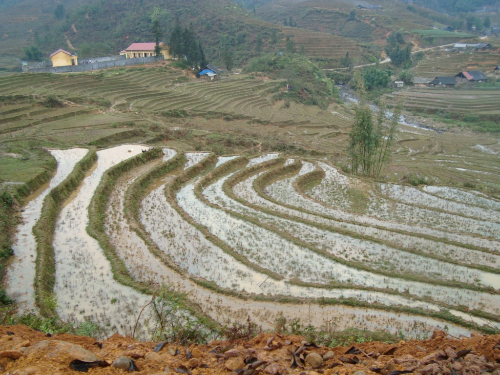 more terraced rice fields
