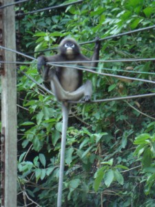 Another fun monkey pic on Tonsai.